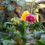 hotel antigua guatemala garden