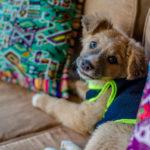 dog-pet-fliendly-hotel-antigua-guatemala-1