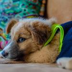 dog-pet-fliendly-hotel-antigua-guatemala-2